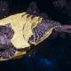 "Tyranid Destroyer - ""Strangler Drone"" - [Jormungandr Sub-Faction]"