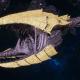 "Tyranid Frigate - ""Clutch Kraken"" - [Jormungandr Sub-Faction]"