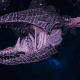 "Tyranid Frigate - ""Clutch Kraken"" - [Hydra Sub-Faction]"