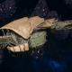 "Tyranid Frigate - ""Corrosive Kraken"" - [Gorgon Sub-Faction]"