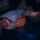 "Tyranid Frigate - ""Corrosive Kraken"" - [Behemoth Sub-Faction]"