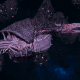"Tyranid Frigate - ""Corrosive Kraken"" - [Hydra Sub-Faction]"