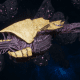 "Tyranid Frigate - ""Corrosive Kraken"" - [Jormungandr Sub-Faction]"