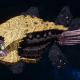 "Tyranid Cruiser - ""Bio Acid Razorfiend"" - [Jormungandr Sub-Faction]"