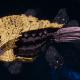 "Tyranid Cruiser - ""Bio Projectile Razorfiend"" - [Jormungandr Sub-Faction]"
