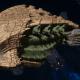 "Tyranid Cruiser - ""Razorfiend"" - [Gorgon Sub-Faction]"