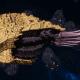 "Tyranid Cruiser - ""Corrosive Infestation Razorfiend"" - [Jormungandr Sub-Faction]"