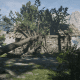 The Homing Tomahawk Pamphlet can be found in this flattened house by Moonstone Pond. The only way to get in is by climbing along this fallen tree.