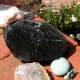 Obsidian from California adorns my garden wall.