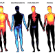 The parts of the body where people feel emotions depend on the emotion.