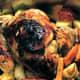 Roast orange chicken and roast vegetables.