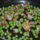 making-spinach-and-fresh-peas-soup