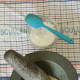 Pound salt and garlic to a smooth paste with a mortar and pestle.