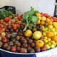 Biodynamic tomatoes