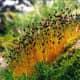 Bryophytes are types of plants. Splachnum Sphaericum (Bryophytes)