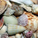 Unidentified mollusk shells from Pixabay