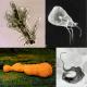 Protozoa kingdom collage