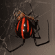 Another beautiful black widow variation.