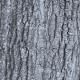 Southern Red Oak Bark