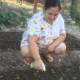 My mother watering the newly planted pechay (Chinese cabbage).