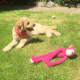 Florrie with her favorite pink toy.