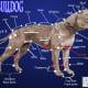 The Leavitt Bulldog