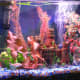 My 10-gallon aquarium with Buenos Aires Albino Tetras