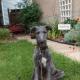 A Scottish Deerhound puppy.