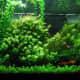 This aquarium is lush with live plants.