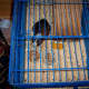 This indoor cage has a lid on the top to prevent escapes and keep pests (like mice) out.