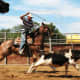 American Quarter horses are hard working ranch hands.