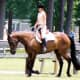 Quarter horses work hard in the arena and are excellent English Dressage horses.