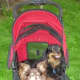 This is a picture of our babies in a Pet Gear stroller out for a walk.