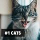 1. Cats