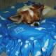 Gizmo loving his bed.