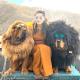 Tibetan Mastiff vs. Caucasian Mountain Dog