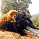 Himalayan guard dogs.