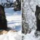 Gaddi Dog vs Bear