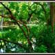 Cypress Creek at Wimberley