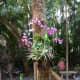 I enjoy Orchids in my mom's garden.
