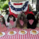 Cute Shih Tzu dogs dressed up for the 4th of July holiday!