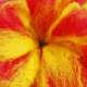 3D Felt Flower Close-up