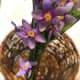 Using craft wire, attach flowers at the base of the basket and work up the handle. Wrap wire around the handle and avoid mashing flowers and leaves.