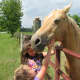 Horses have always brought me and my family joy. What have horses brought to your life?