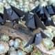 Bats on a Limb