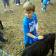 Taking care of the animals at the petting zoo.