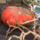 thanksgiving-centerpieces-using-succulents-and-other-drought-resistant-plants
