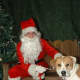Even dogs are scared of Santa.  Rover knows a creeper when he sees one.