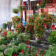 """Other than traditional Chinese New Year plants such as Cockscombs and """"Phoenix Tails,"""" all sorts of other plants are also sold at the festive bazaars too"""