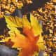 Fall's color palette is so diverse. Each leaf's hue is unique.